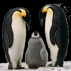 pingouin le nouvel algorithme de Google