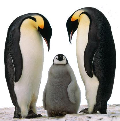 WebMarketing Blog – Le Pingouin a déclassé le blog et comment m ...